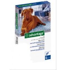 Anti-vlooienmiddel Advantage 400 meer dan 25kg